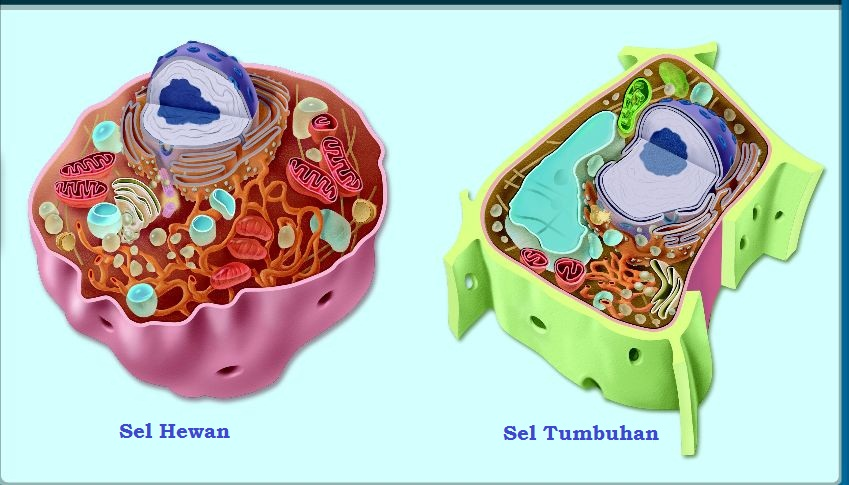 Sel Hewan Dan Tumbuhan on Eukaryotic Cell Diagram Unlabeled